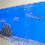 Tiburones en Jing'an