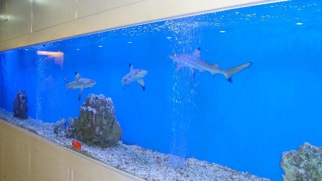 tiburones Jingan Tiburones en Jingan